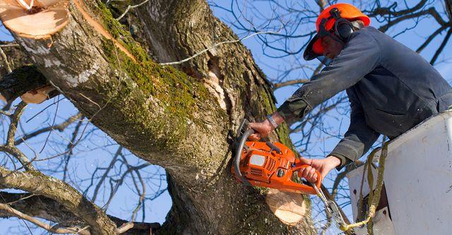 Tree Service Chilliwack